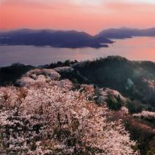 千本桜(岩城)