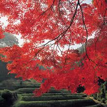 石折神社(玉川)